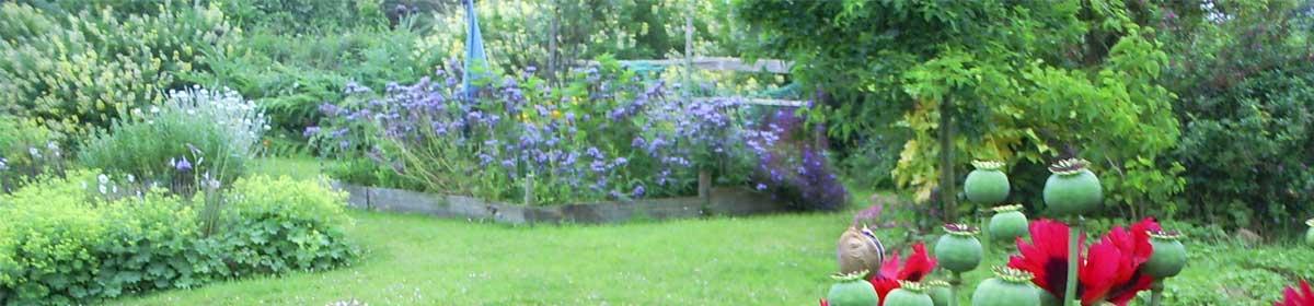 Aphrodites's Gardens